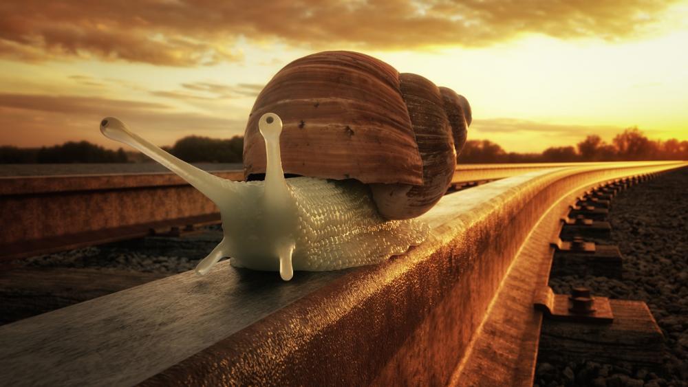 Snail on rail wallpaper
