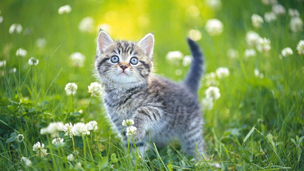 Cute cat in clover flower field wallpaper