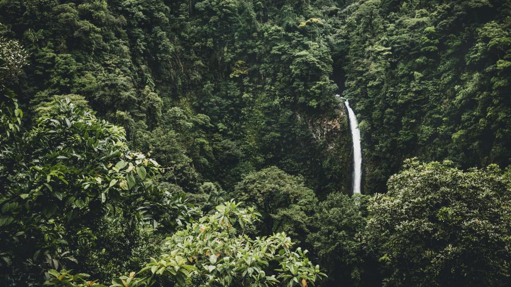 Waterfall in the tropical rainforest wallpaper