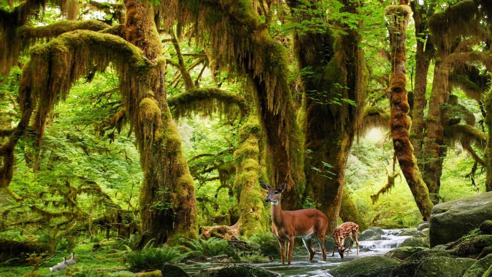 Deers in the rainforest wallpaper