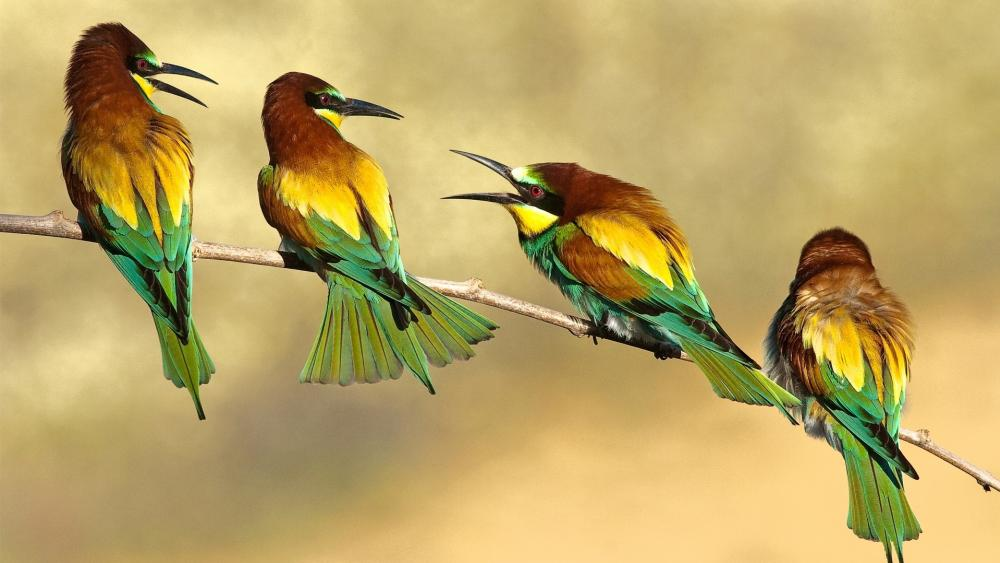 Small birds on a twig wallpaper