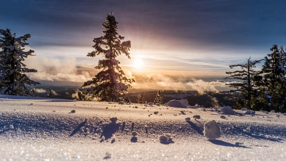 Winter sunshine wallpaper