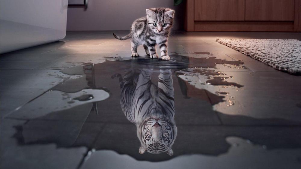 Little cat or a Tiger wallpaper