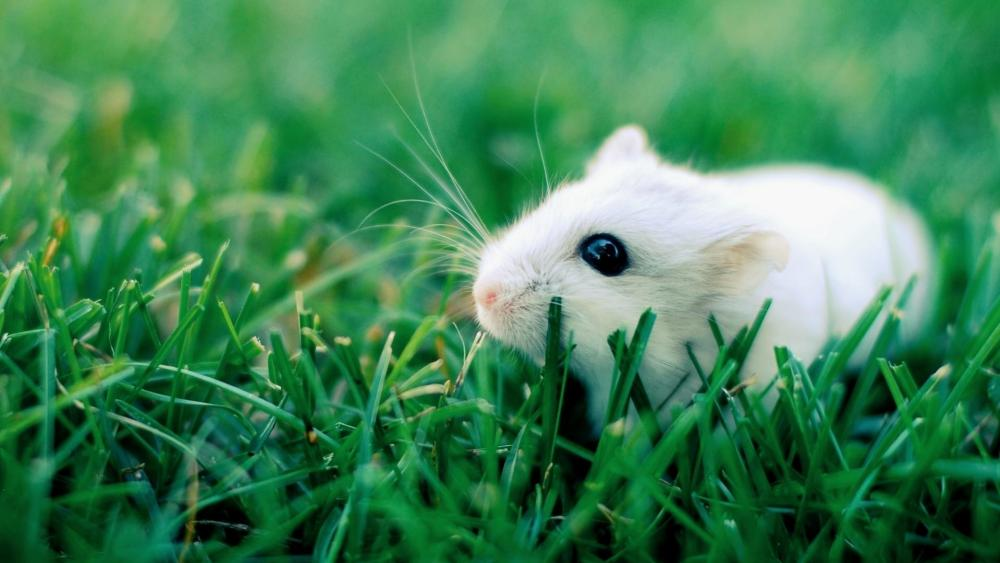 Very cute white mouse wallpaper