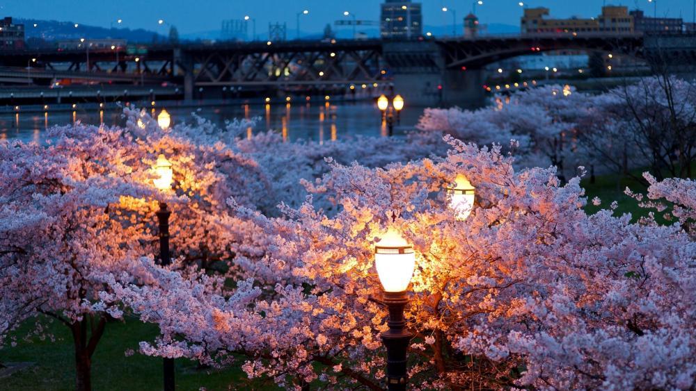 City Spring Night  wallpaper