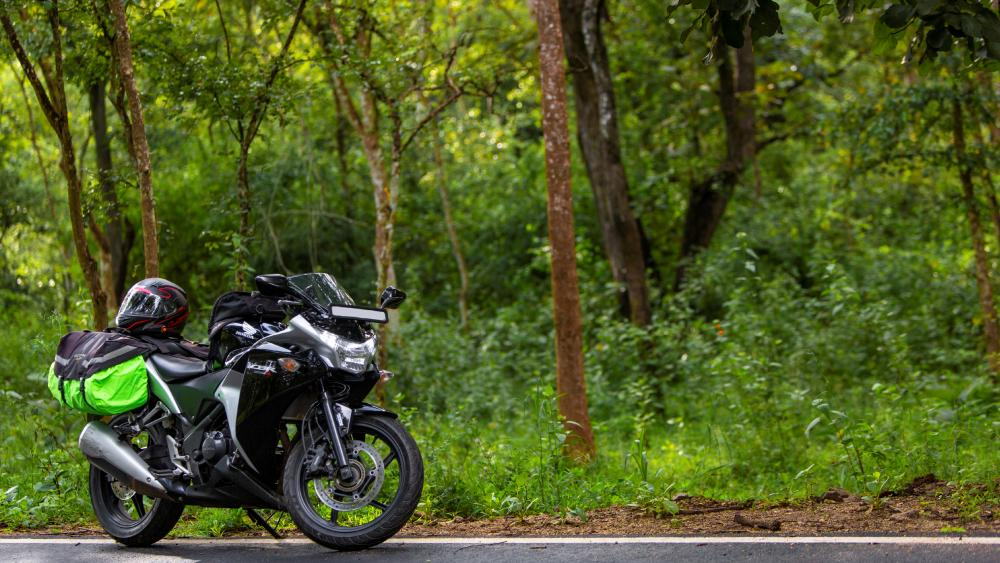 Motorcycle ride through Forest wallpaper
