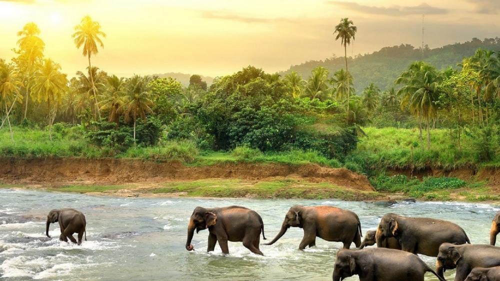 Elephant Orphanage wallpaper