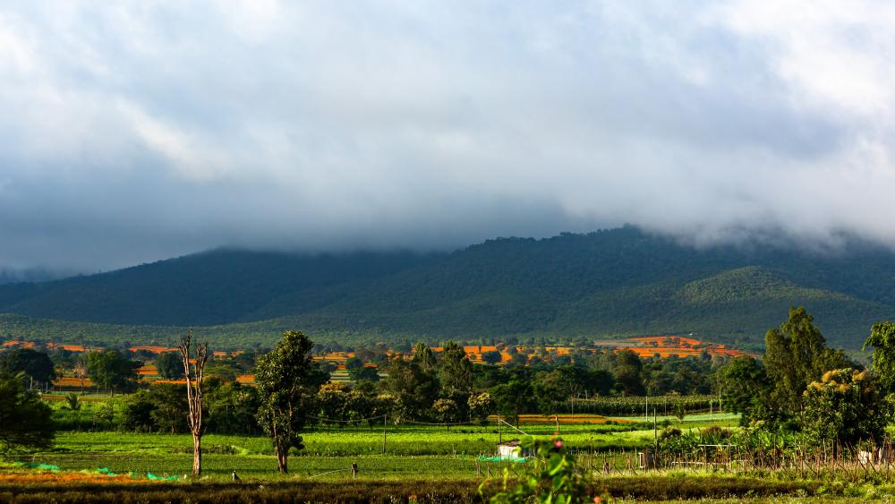 Cloud covering Mountain wallpaper