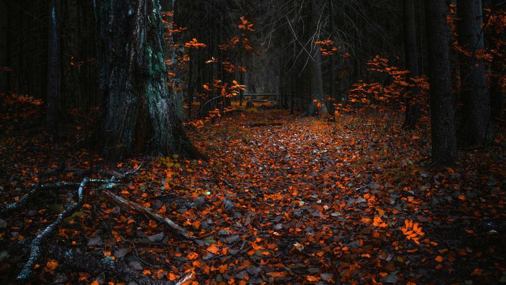 Autumn forest wallpaper