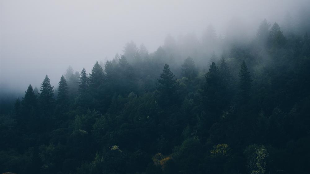 Cloud Forest wallpaper