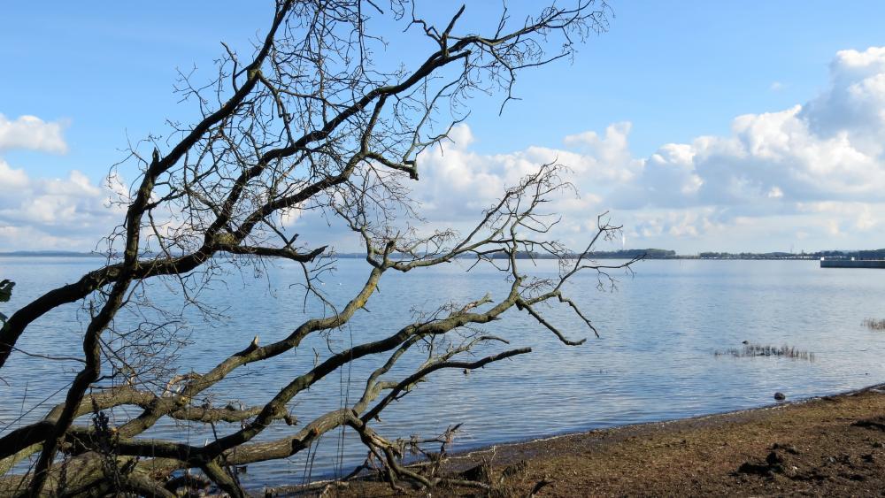 dead tree on the baltic sea wallpaper