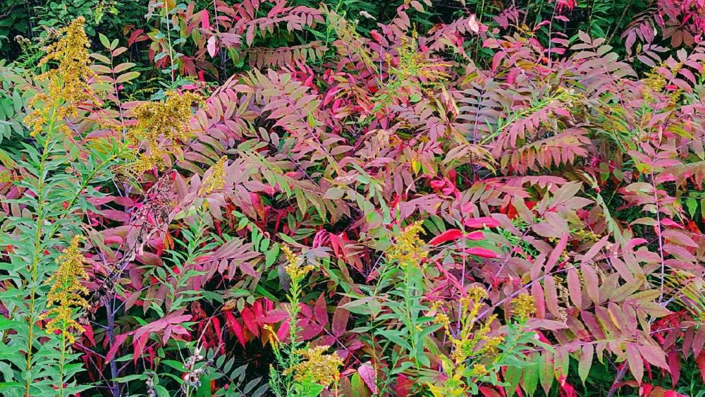 Fall Colors wallpaper