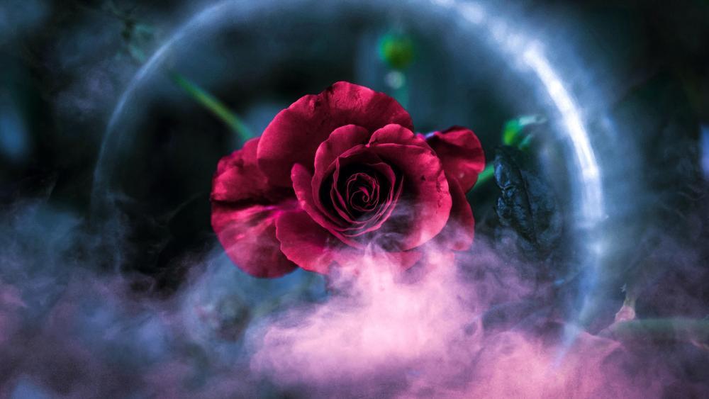 Roses Plant Petals wallpaper
