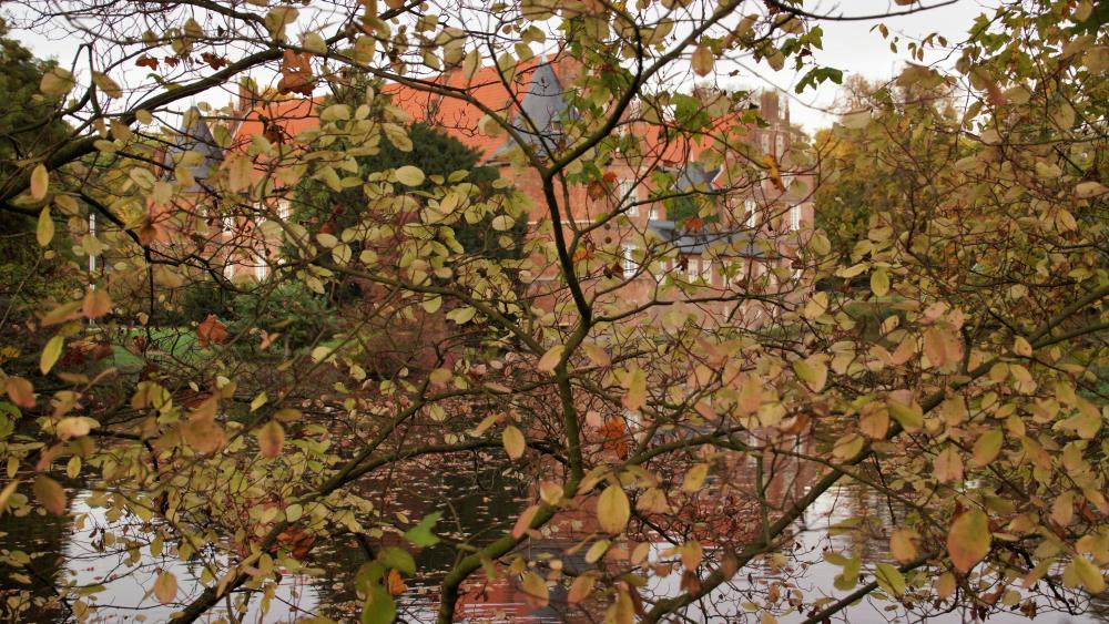Schloss hinter Bäumen wallpaper