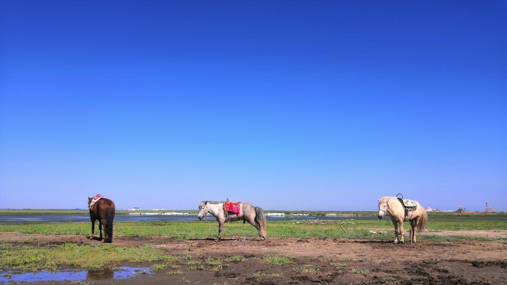 Zhangjiakou's horses should be free wallpaper