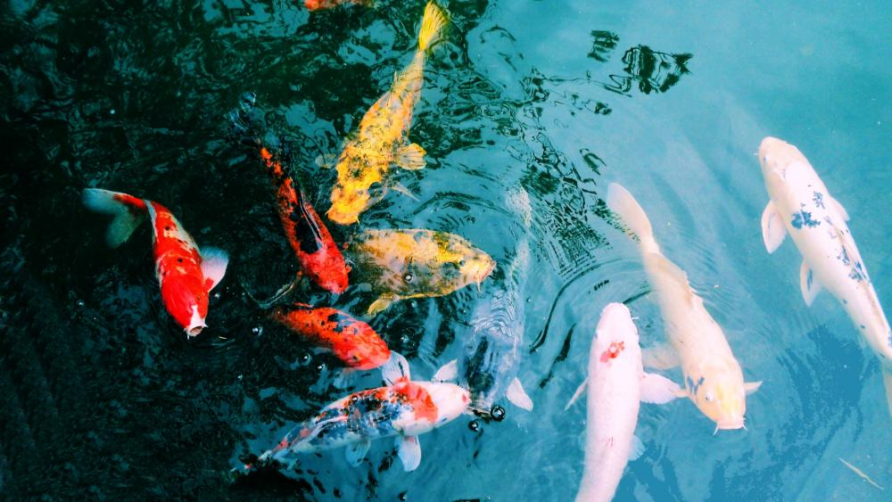 Basin fish wallpaper