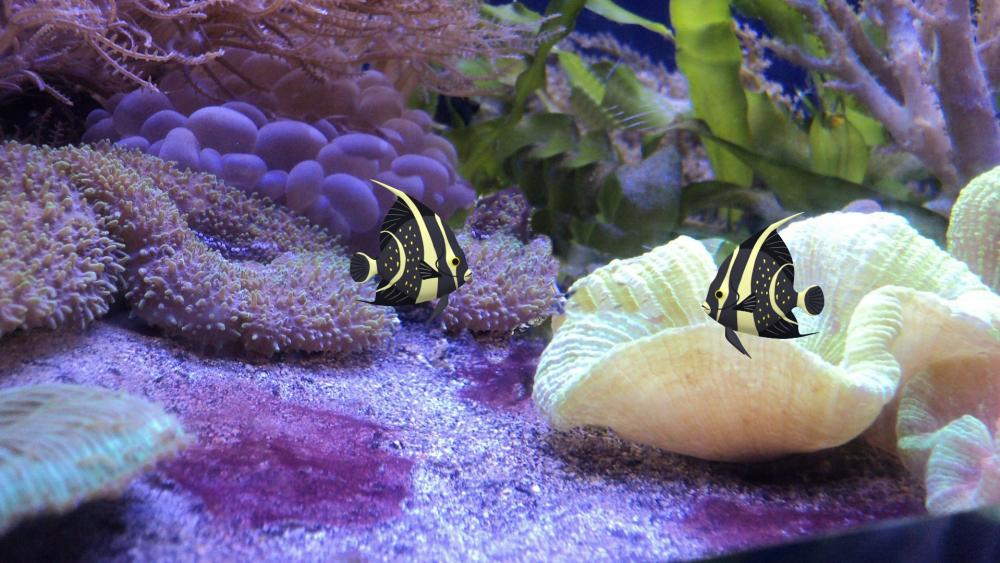 Angelfish wallpaper