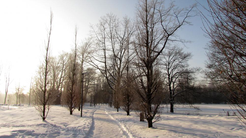 Wandern durch den Schnee wallpaper