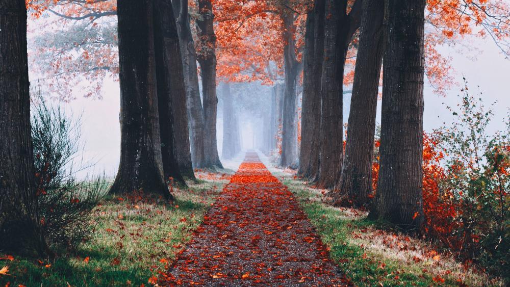 Autumn promenade wallpaper