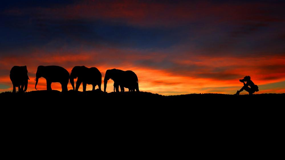 Elephants silhouette wallpaper