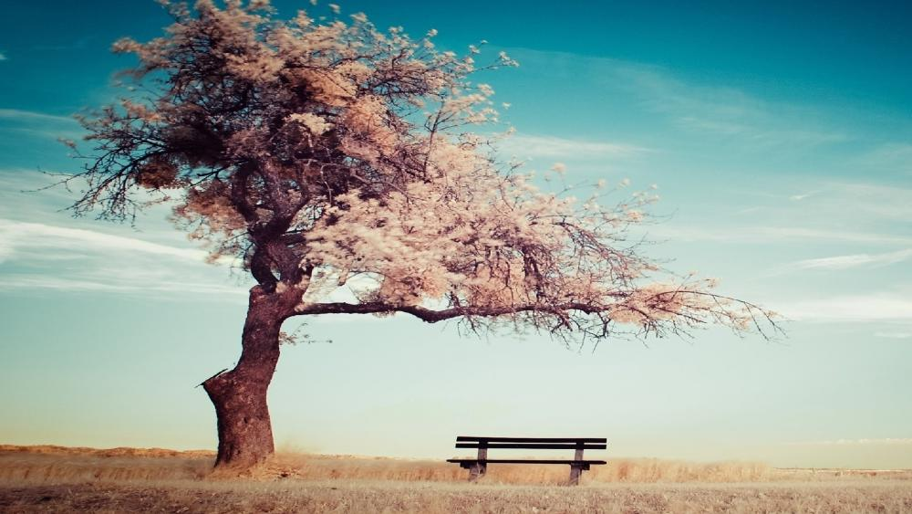 Baum mit Bank wallpaper