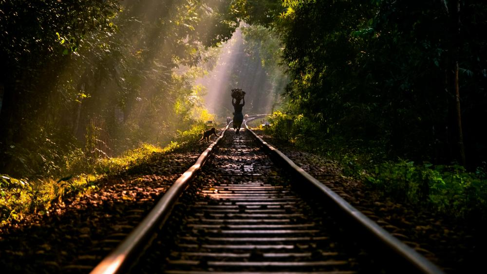 Train Tracks in Lawachara National Park, Bangladesh wallpaper