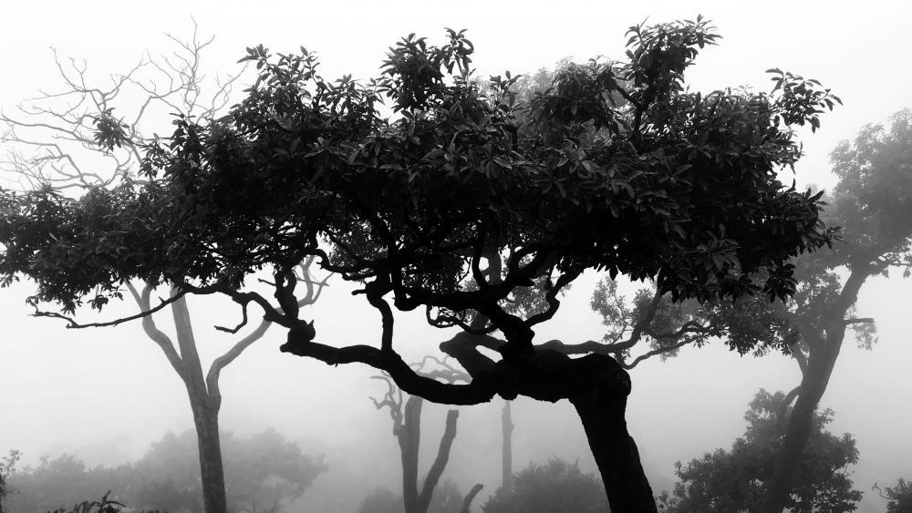 tree black and white wallpaper