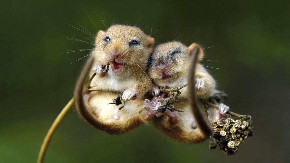 Cute fluffy rodents wallpaper
