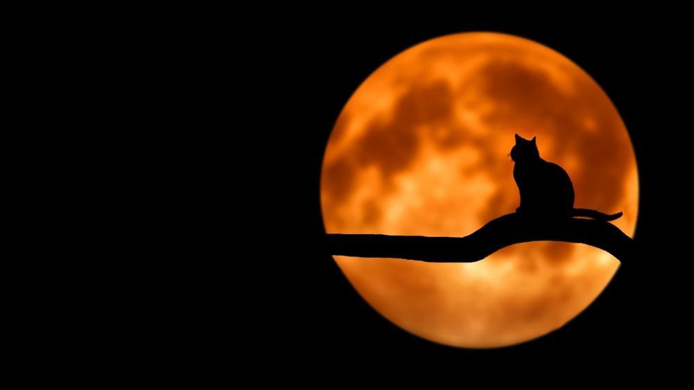 Cat at full moon wallpaper