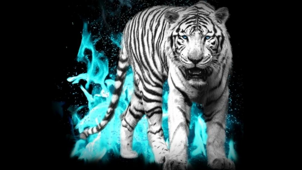White Tiger in dark background wallpaper