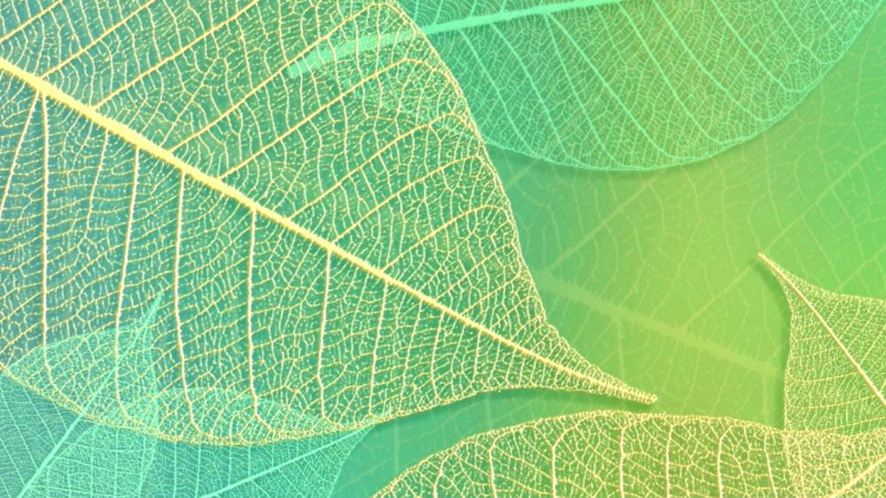 Green leaf pattern wallpaper