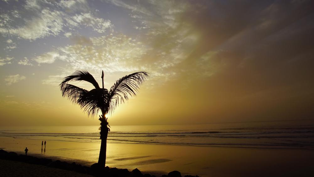 Sunset under the palm trees wallpaper