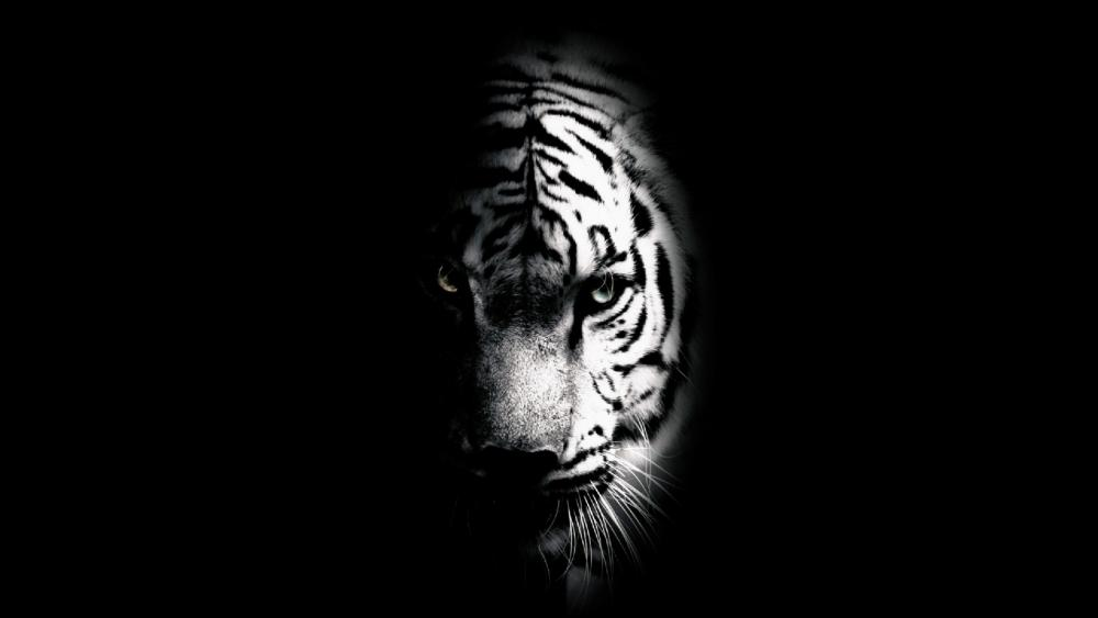 Tiger's face wallpaper