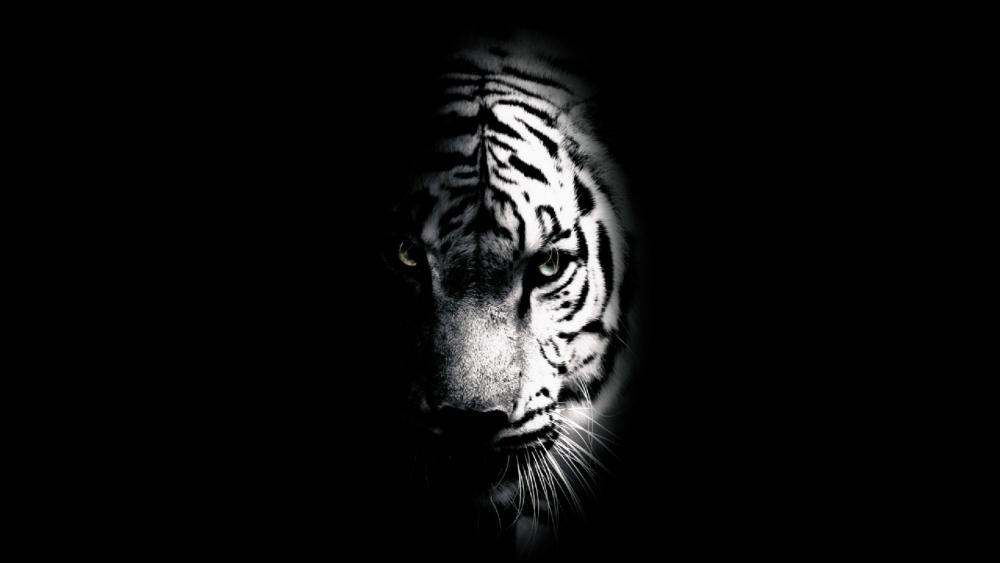Tiger's face wallpaper