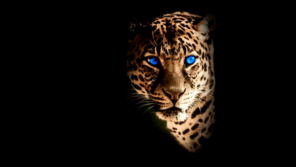 Blue-eye Yellow face Jaguar wallpaper
