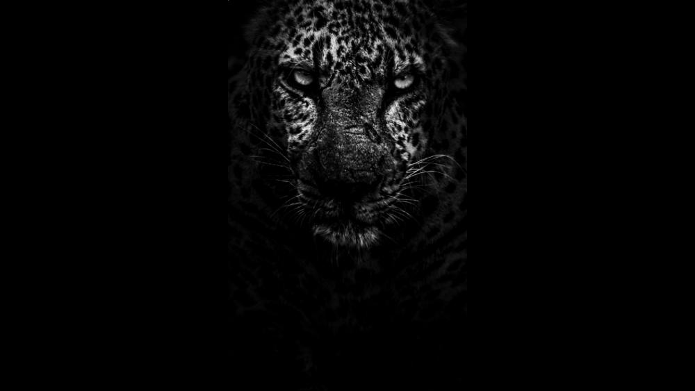 Sneaking Leopard wallpaper
