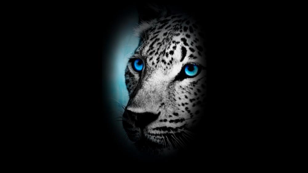 Blue eye Leopard wallpaper