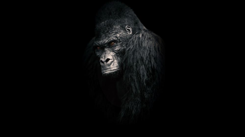 Gorilla wallpaper
