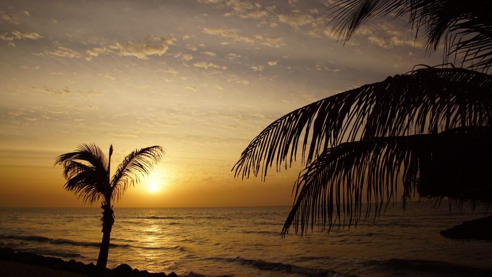 Sonnenuntergang unter Palmen wallpaper