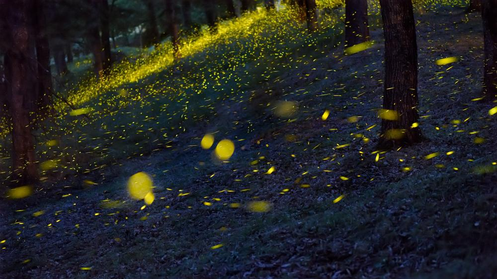 Fireflies in the forest wallpaper