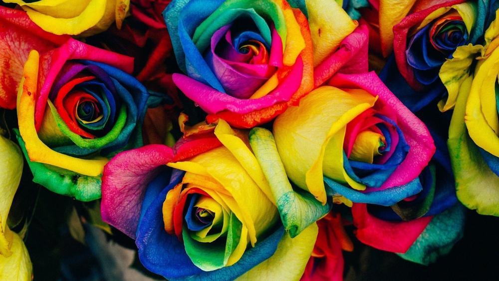 Multicolor roses wallpaper