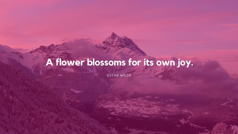 A flower blossoms for its own joy wallpaper