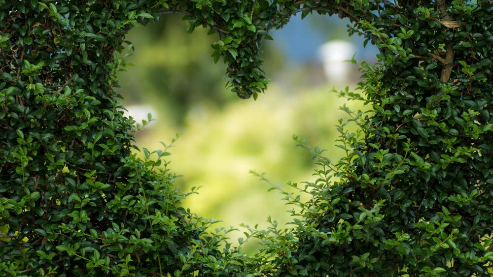 Bush heart wallpaper