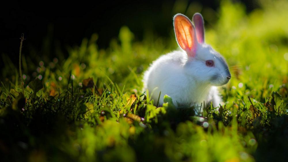 Rabbit in the grass wallpaper