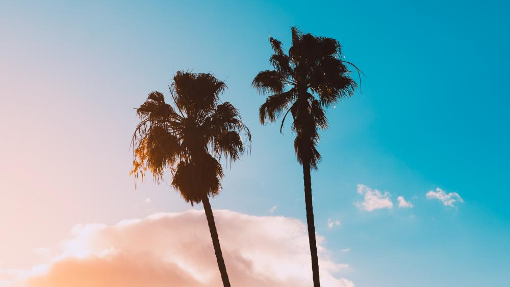 Palms and sky wallpaper