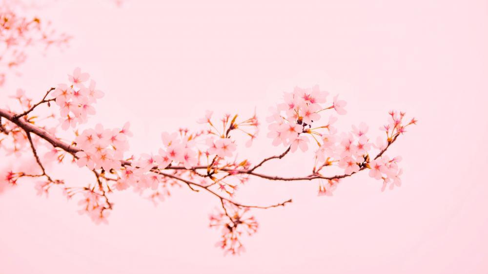 Pink twig wallpaper
