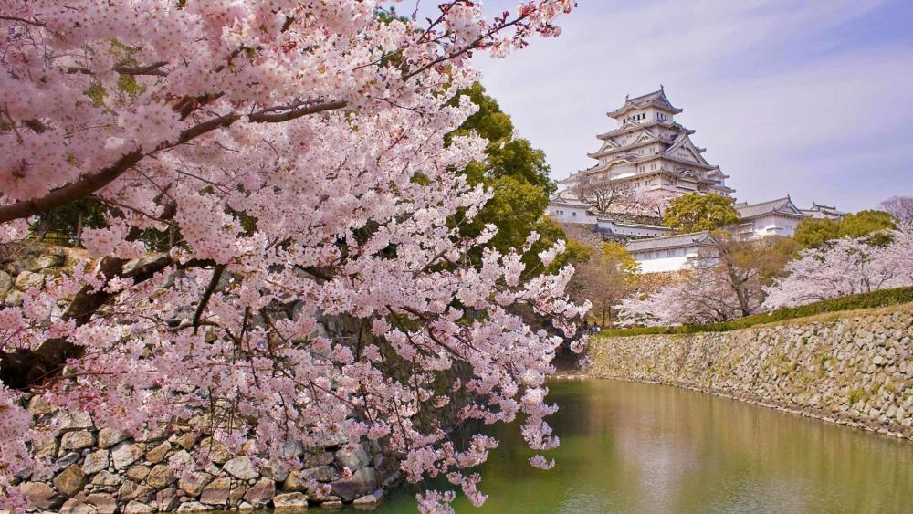 Himeji Castle wallpaper