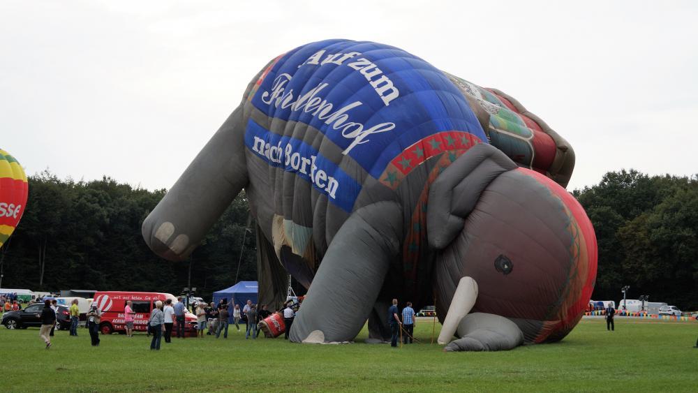 Elefant wallpaper