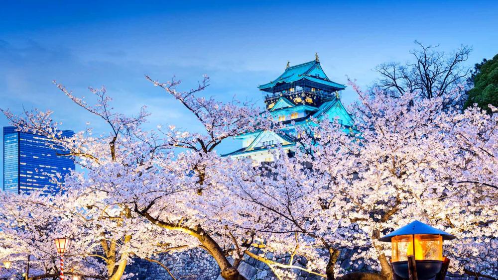 Osaka Castle during the spring season wallpaper