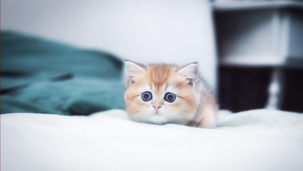Sad kitten wallpaper